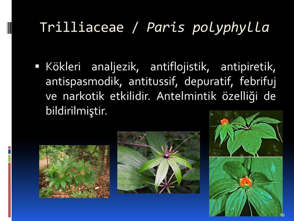 Trilliaceae / Paris polyphylla