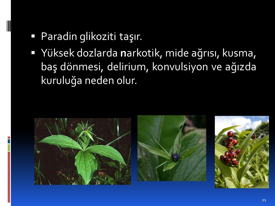 Paradin glikoziti taşır.