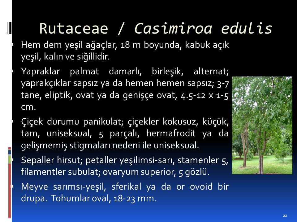 Rutaceae / Casimiroa edulis