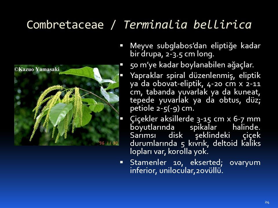Combretaceae / Terminalia bellirica