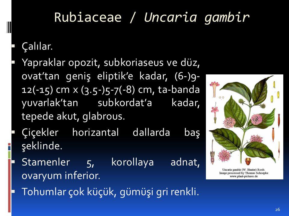 Rubiaceae / Uncaria gambir