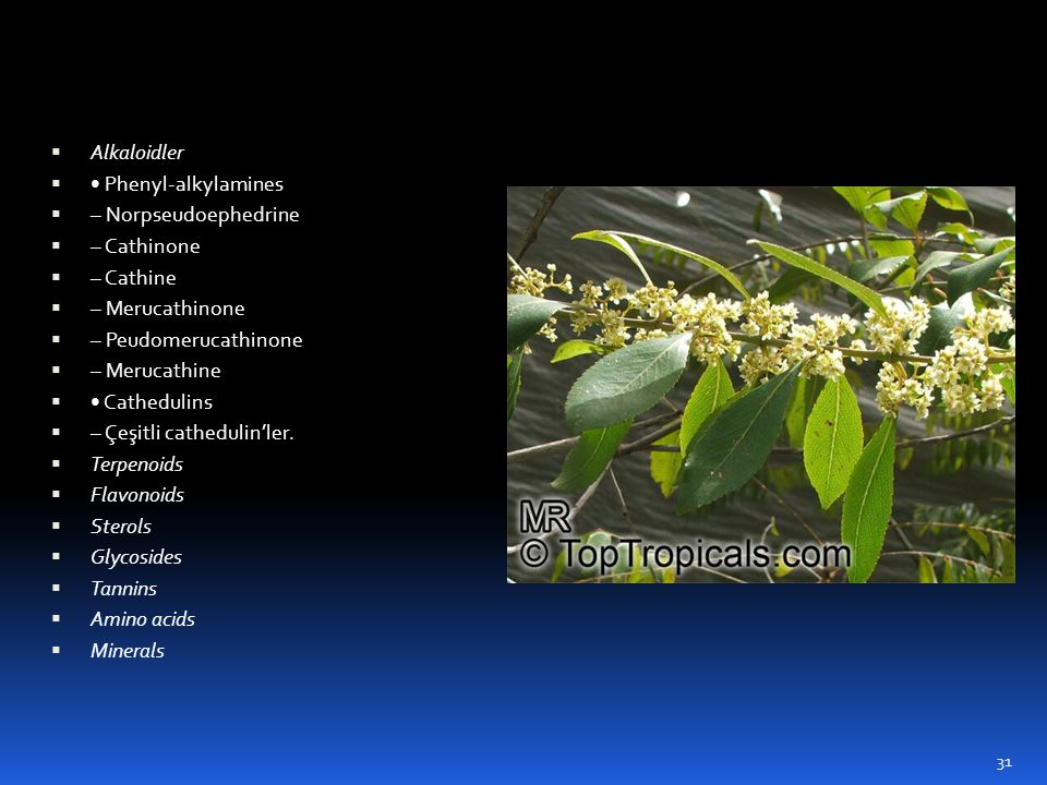 Alkaloidler • Phenyl-alkylamines. – Norpseudoephedrine. – Cathinone. – Cathine. – Merucathinone.