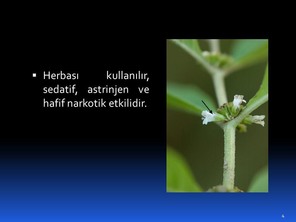 Herbası kullanılır, sedatif, astrinjen ve hafif narkotik etkilidir.