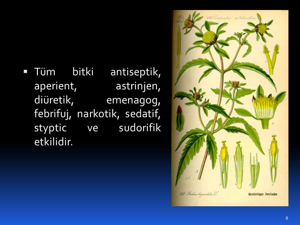 Tüm bitki antiseptik, aperient, astrinjen, diüretik, emenagog, febrifuj, narkotik, sedatif, styptic ve sudorifik etkilidir.