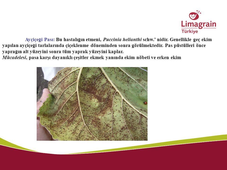 Ayçiçeği Pası: Bu hastalığın etmeni, Puccinia helianthi schw. ' nidir