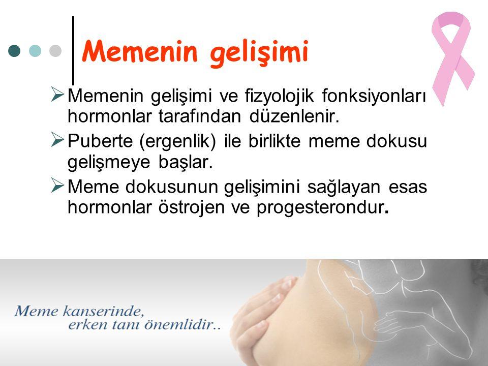 Memenin gelişimi Memenin gelişimi ve fizyolojik fonksiyonları hormonlar tarafından düzenlenir.