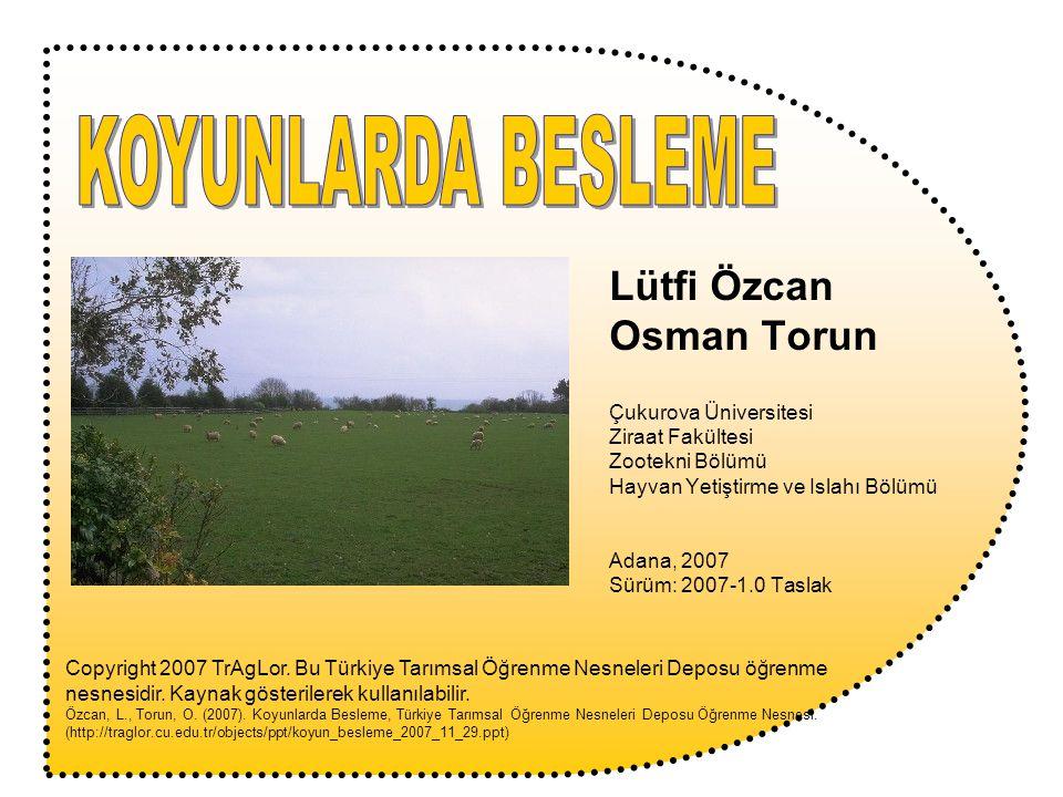 KOYUNLARDA BESLEME Lütfi Özcan Osman Torun Çukurova Üniversitesi