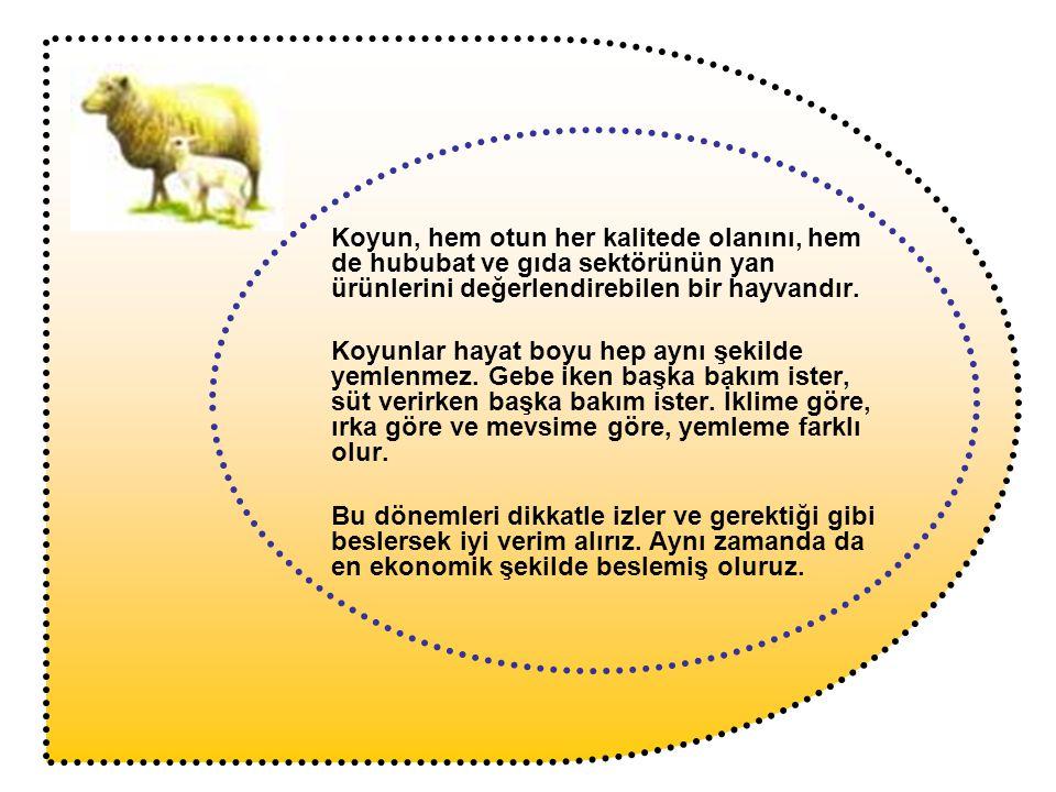 Koyun, hem otun her kalitede olanını, hem de hububat ve gıda sektörünün yan ürünlerini değerlendirebilen bir hayvandır.