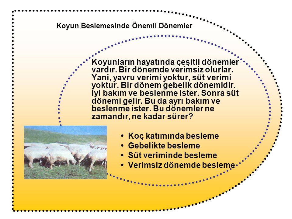 Koyun Beslemesinde Önemli Dönemler