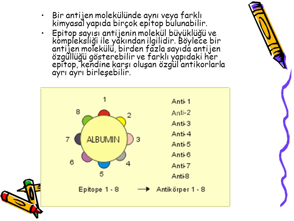 Bir antijen molekülünde aynı veya farklı kimyasal yapıda birçok epitop bulunabilir.