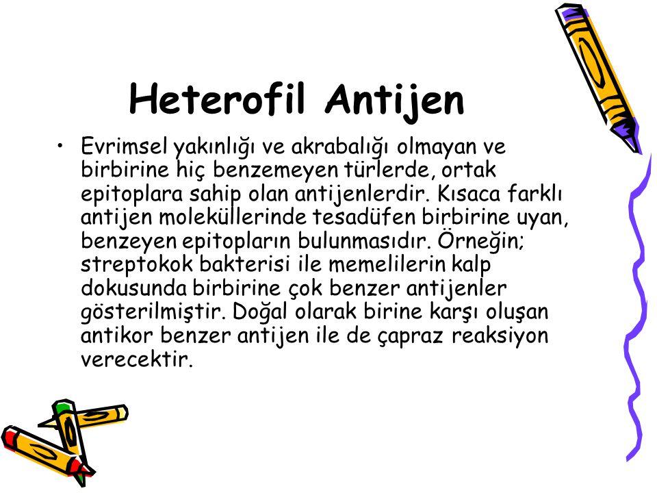 Heterofil Antijen
