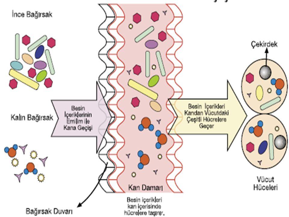 Aşağıdaki şemada sindirime uğrayan besinlerin bağırsaklardan kana, kandan da vücut hücrelerine geçişi görülmektedir.