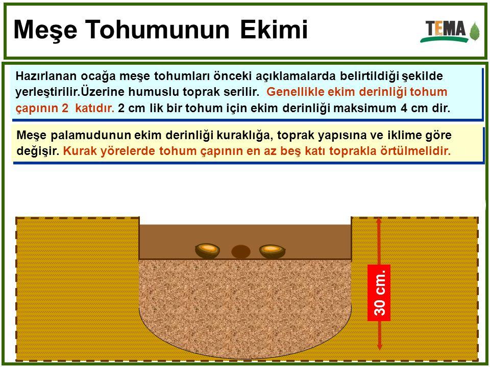 Meşe Tohumunun Ekimi Humuslu Üst Toprak 30 cm. 20 cm.