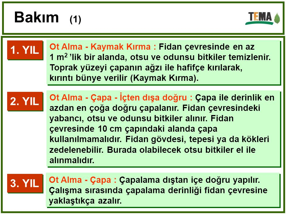 Bakım (1) 1. YIL. Ot Alma - Kaymak Kırma : Fidan çevresinde en az. 1 m2 'lik bir alanda, otsu ve odunsu bitkiler temizlenir.
