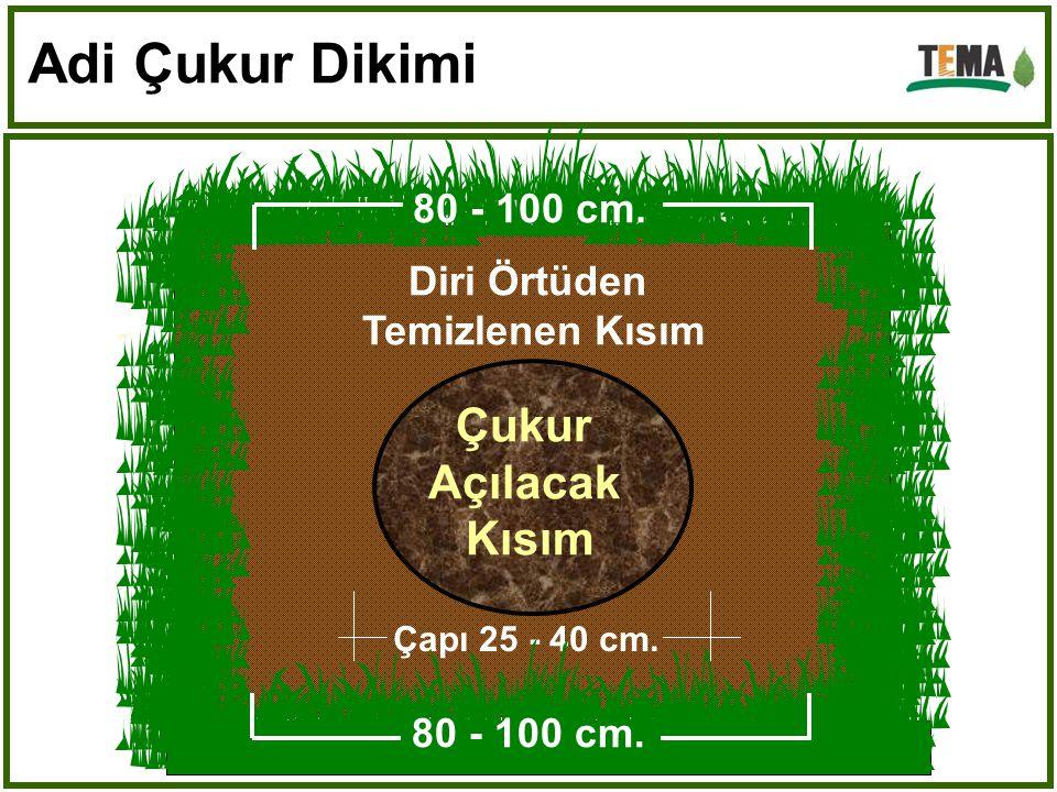 Adi Çukur Dikimi Çukur Açılacak Kısım 80 - 100 cm. Diri Örtüden