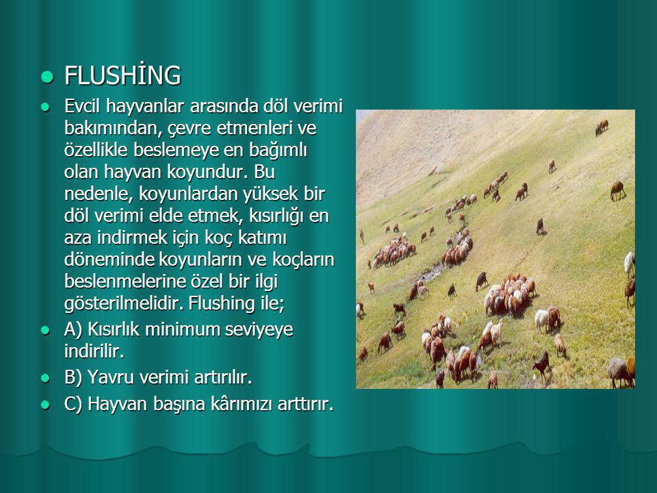 FLUSHİNG