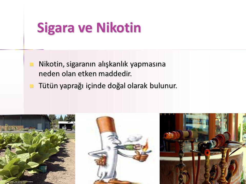 Sigara ve Nikotin Nikotin, sigaranın alışkanlık yapmasına neden olan etken maddedir.