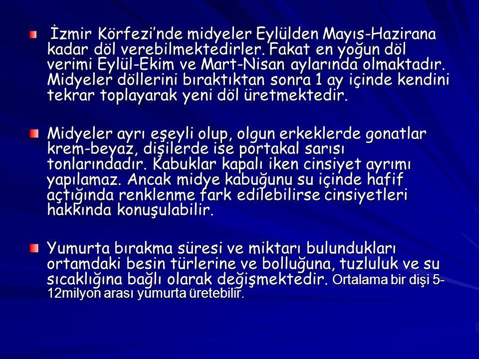 İzmir Körfezi'nde midyeler Eylülden Mayıs-Hazirana kadar döl verebilmektedirler. Fakat en yoğun döl verimi Eylül-Ekim ve Mart-Nisan aylarında olmaktadır. Midyeler döllerini bıraktıktan sonra 1 ay içinde kendini tekrar toplayarak yeni döl üretmektedir.