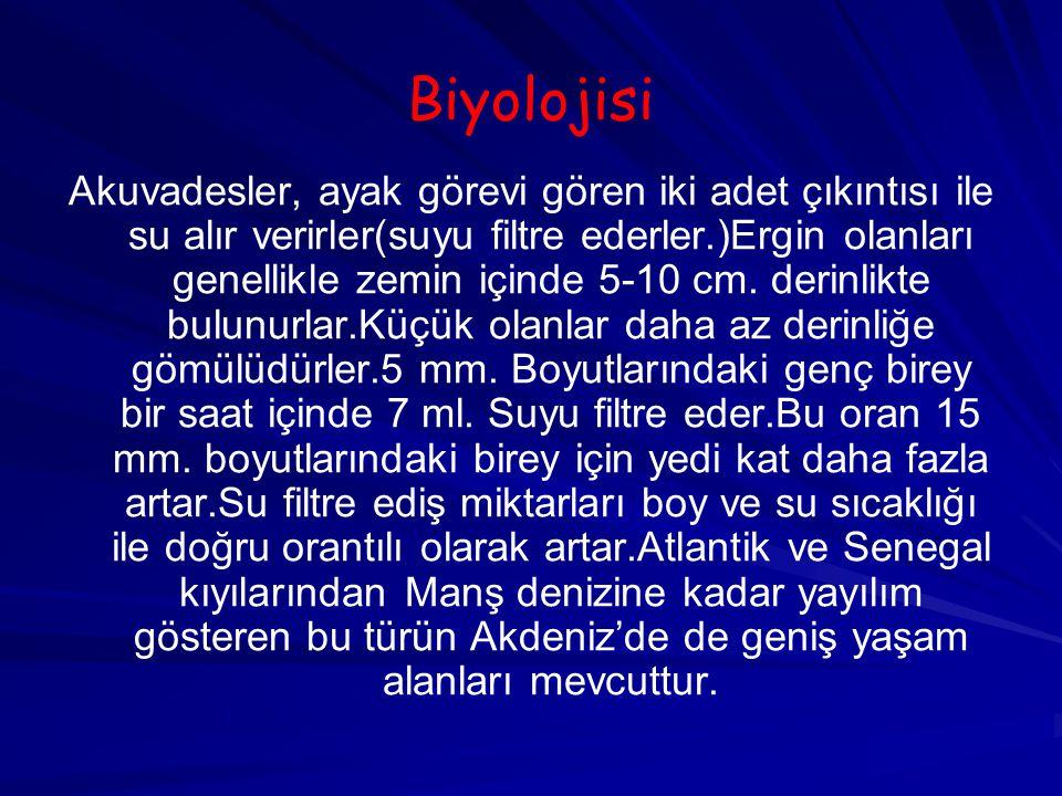 Biyolojisi