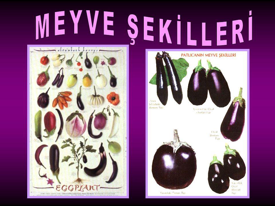 MEYVE ŞEKİLLERİ