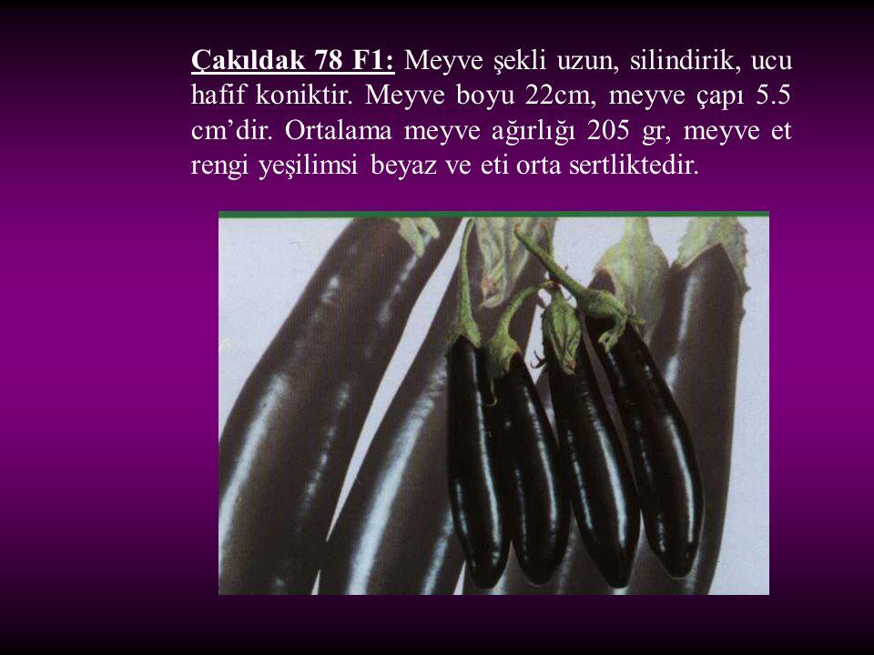 Çakıldak 78 F1: Meyve şekli uzun, silindirik, ucu hafif koniktir