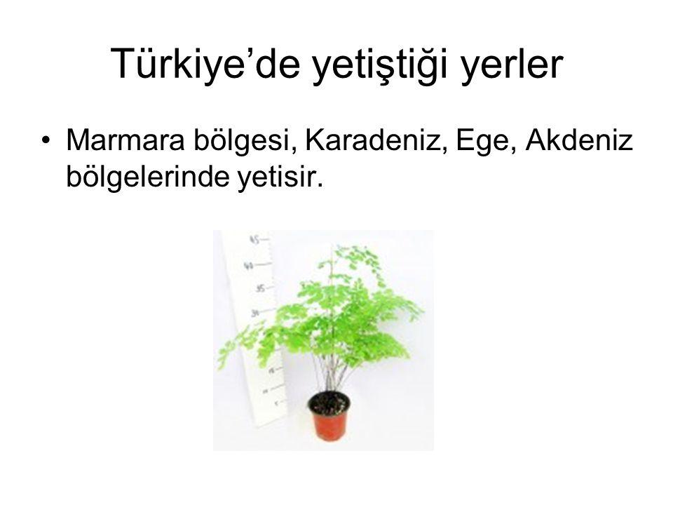 Türkiye'de yetiştiği yerler