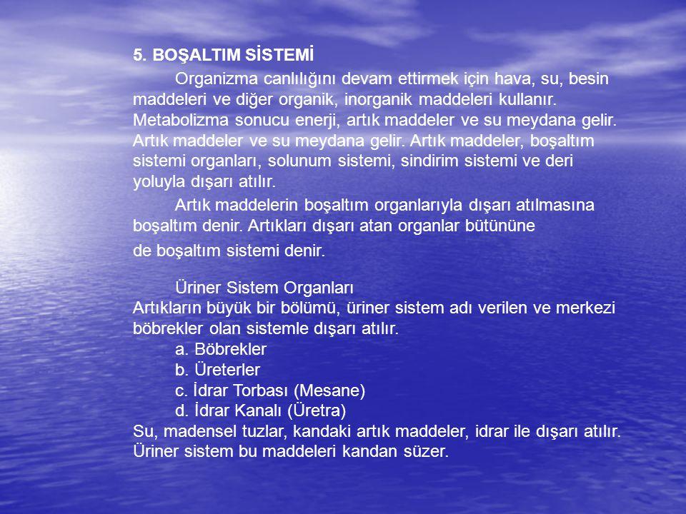 5. BOŞALTIM SİSTEMİ