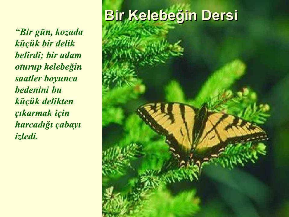 Bir Kelebeğin Dersi
