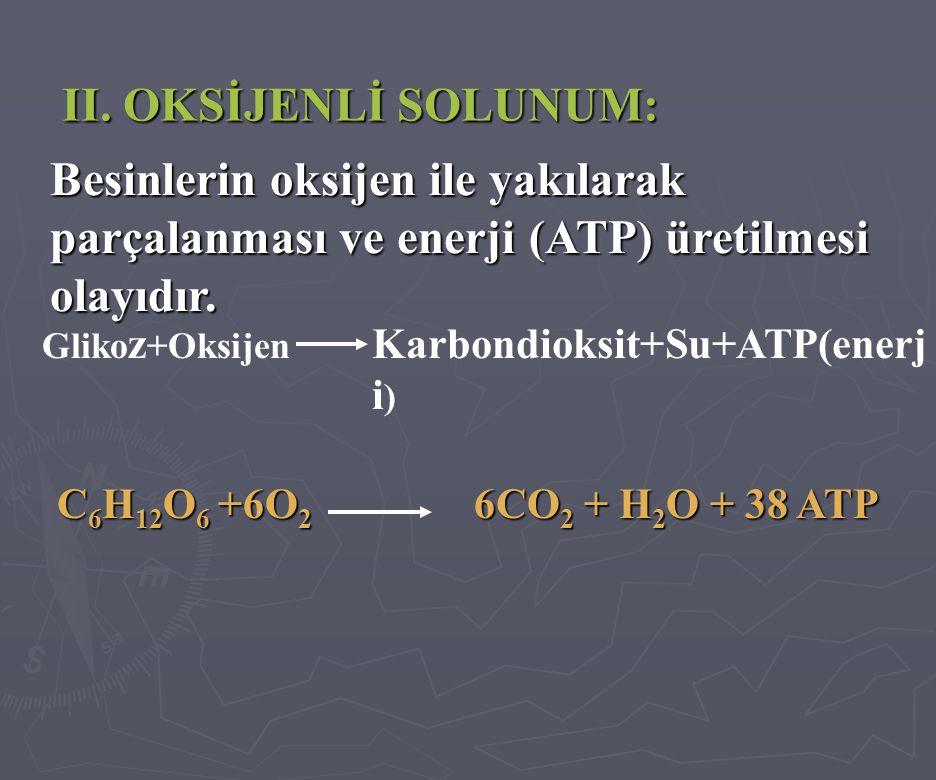 II. OKSİJENLİ SOLUNUM: Besinlerin oksijen ile yakılarak parçalanması ve enerji (ATP) üretilmesi olayıdır.