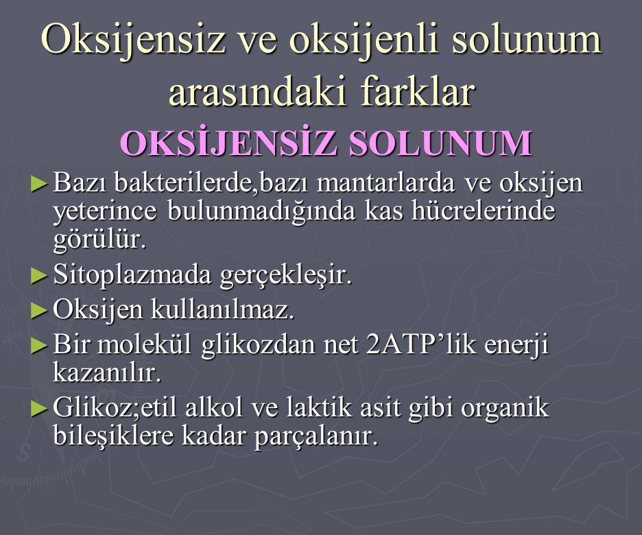 Oksijensiz ve oksijenli solunum arasındaki farklar