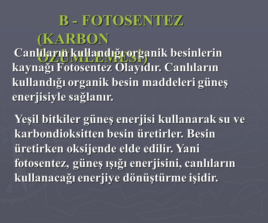 B - FOTOSENTEZ (KARBON ÖZÜMLEMESİ)