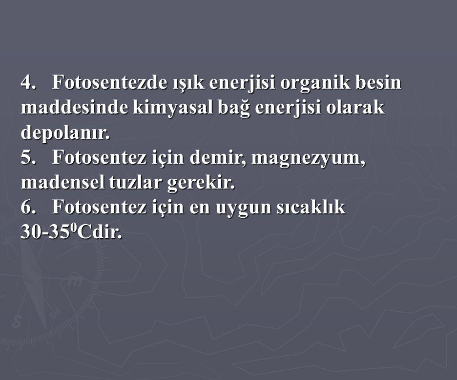 4. Fotosentezde ışık enerjisi organik besin maddesinde kimyasal bağ enerjisi olarak depolanır.