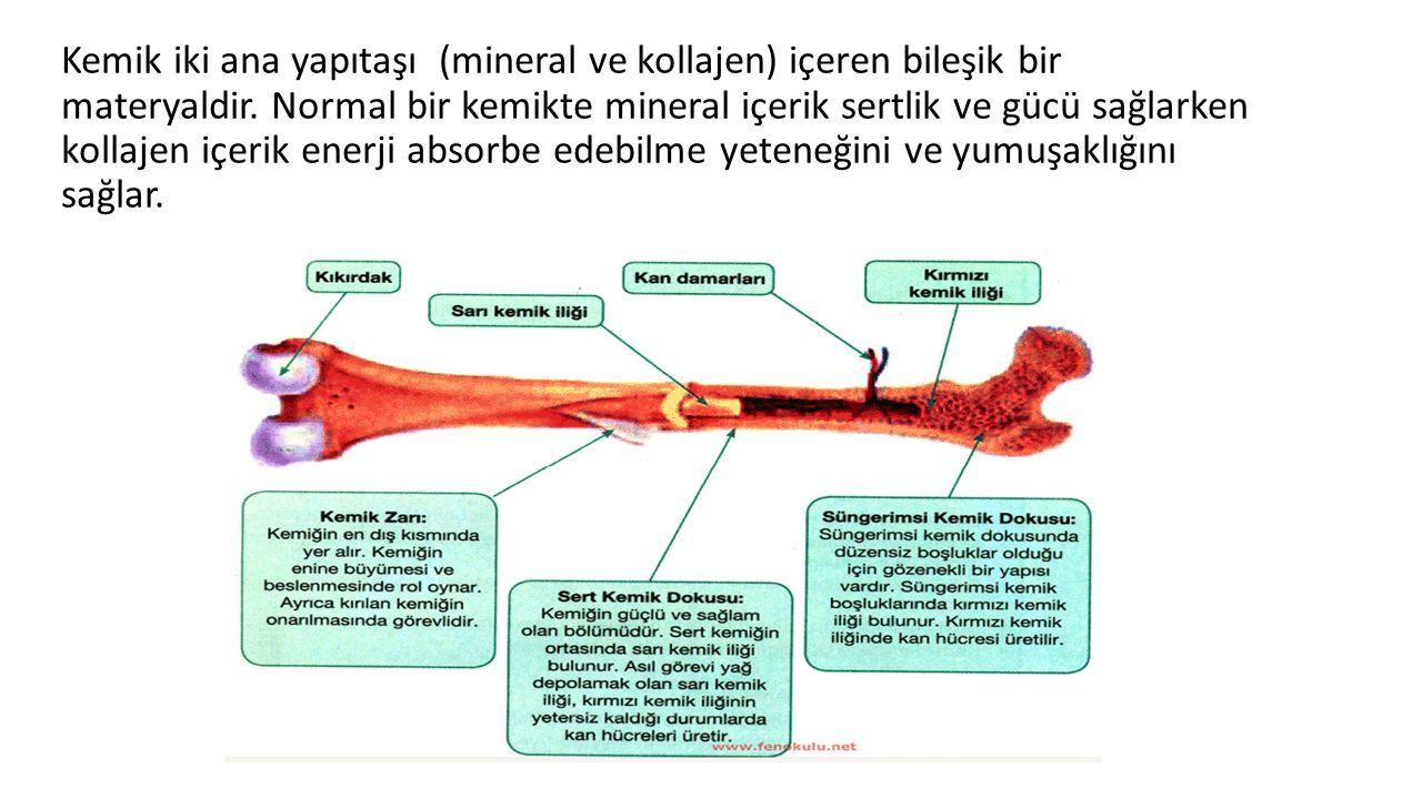Kemik iki ana yapıtaşı (mineral ve kollajen) içeren bileşik bir materyaldir.