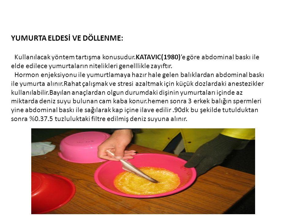 YUMURTA ELDESİ VE DÖLLENME: