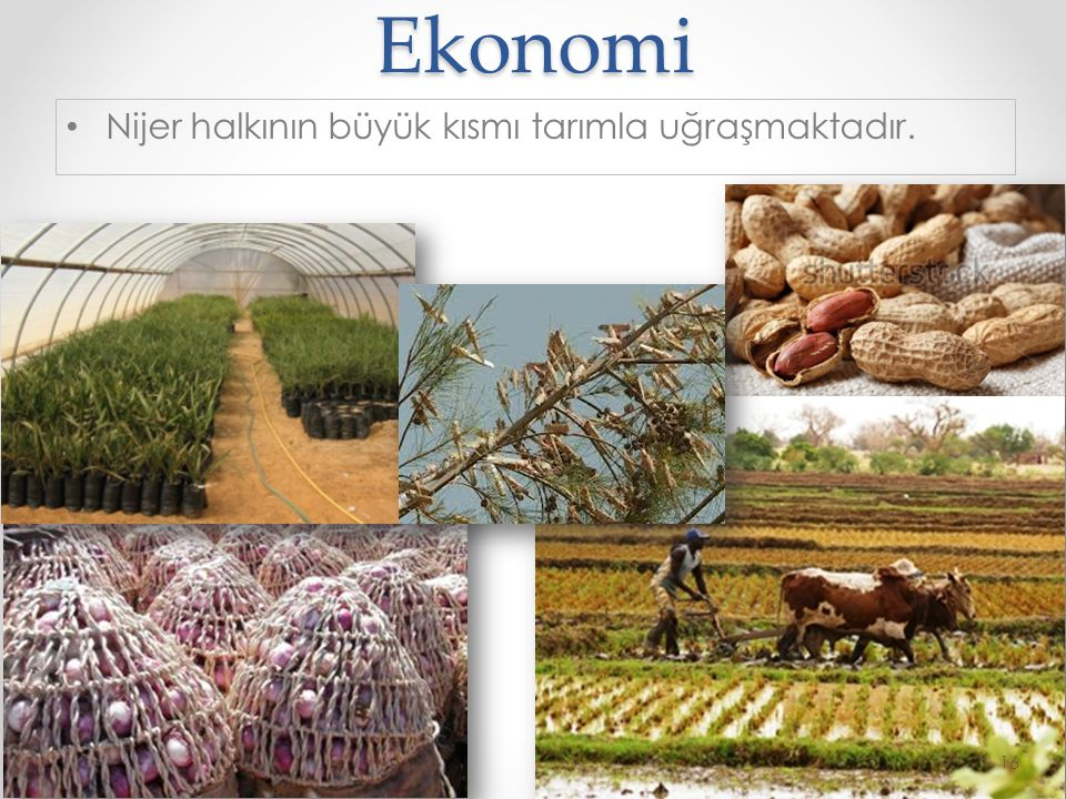 Ekonomi Nijer halkının büyük kısmı tarımla uğraşmaktadır.