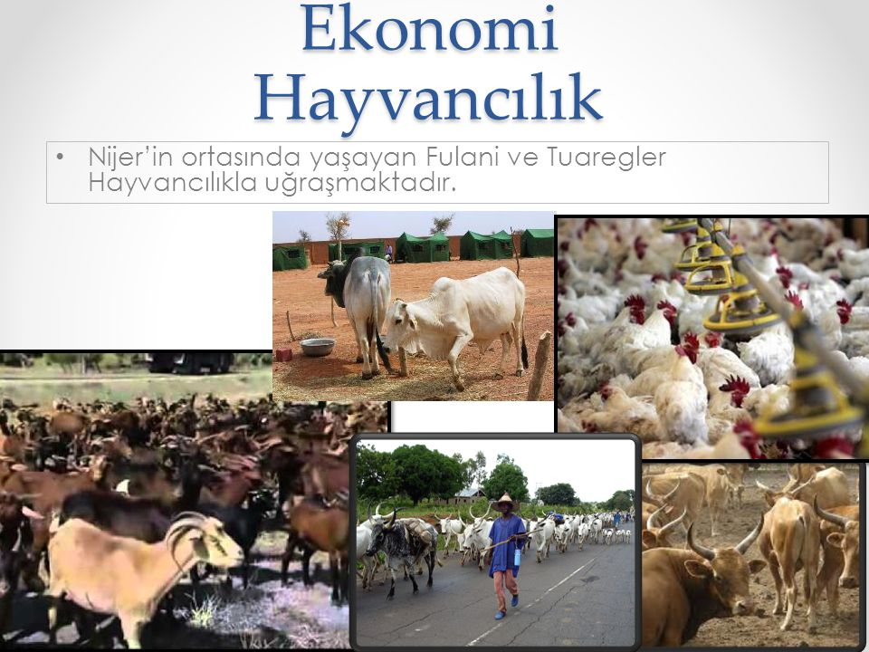 Ekonomi Hayvancılık Nijer'in ortasında yaşayan Fulani ve Tuaregler Hayvancılıkla uğraşmaktadır.