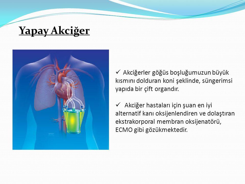 Yapay Akciğer Akciğerler göğüs boşluğumuzun büyük