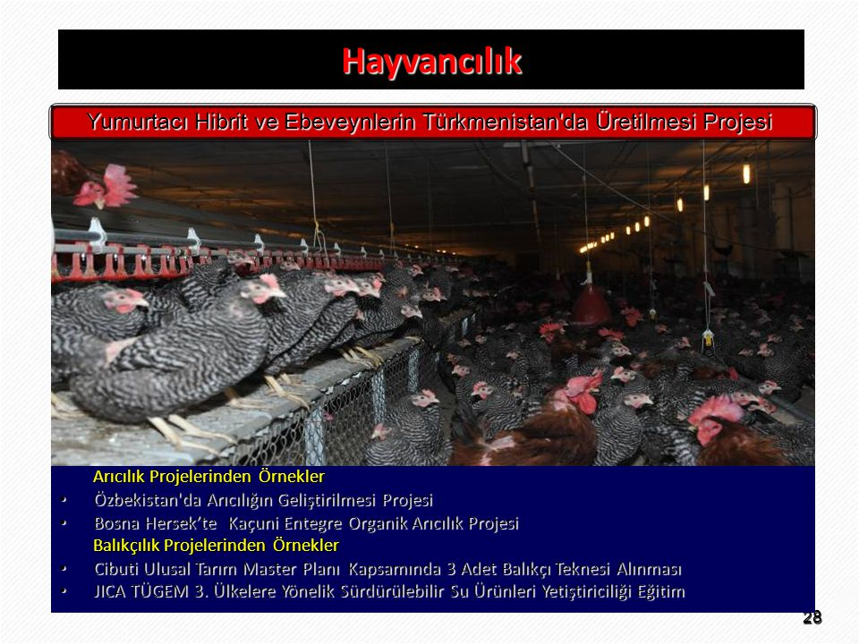 Yumurtacı Hibrit ve Ebeveynlerin Türkmenistan da Üretilmesi Projesi
