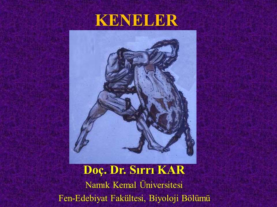 KENELER Doç. Dr. Sırrı KAR Namık Kemal Üniversitesi