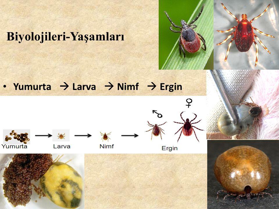 Biyolojileri-Yaşamları