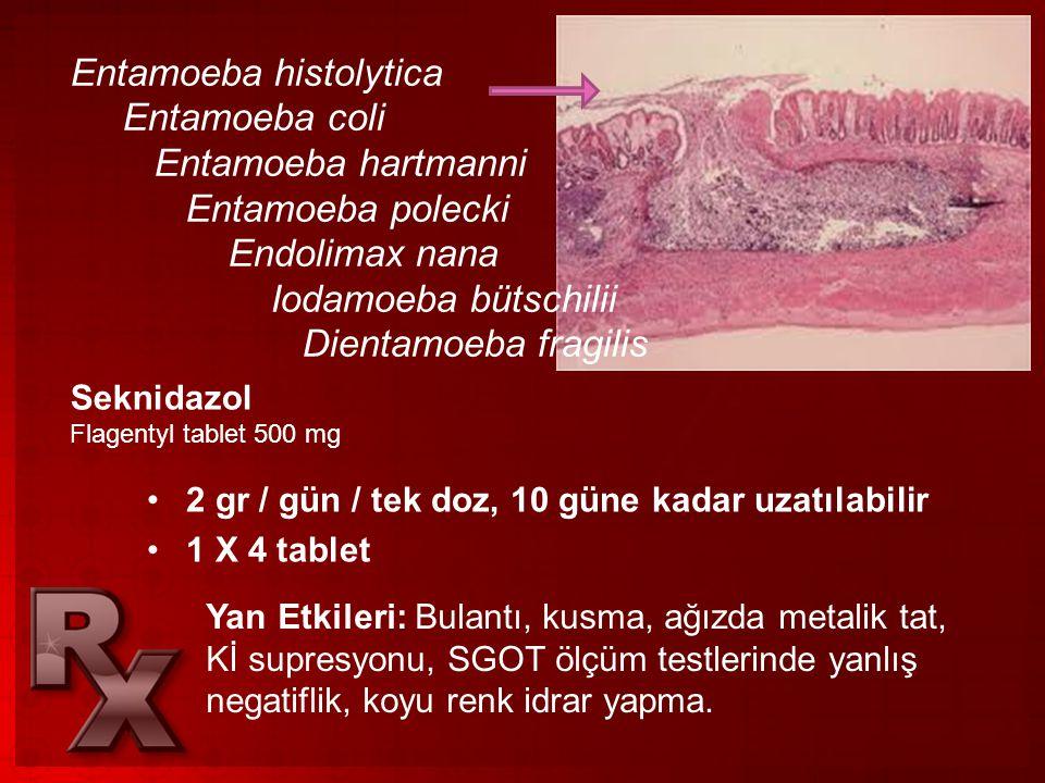 Entamoeba histolytica Entamoeba coli Entamoeba hartmanni Entamoeba polecki Endolimax nana Iodamoeba bütschilii Dientamoeba fragilis