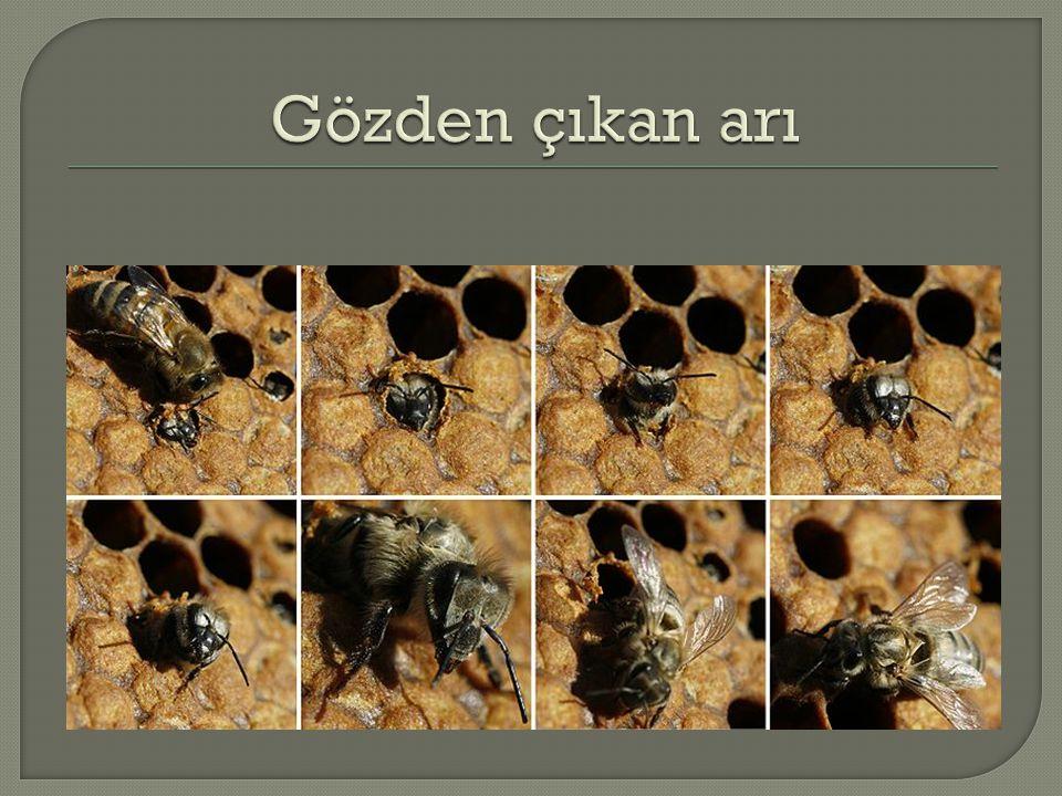 Gözden çıkan arı