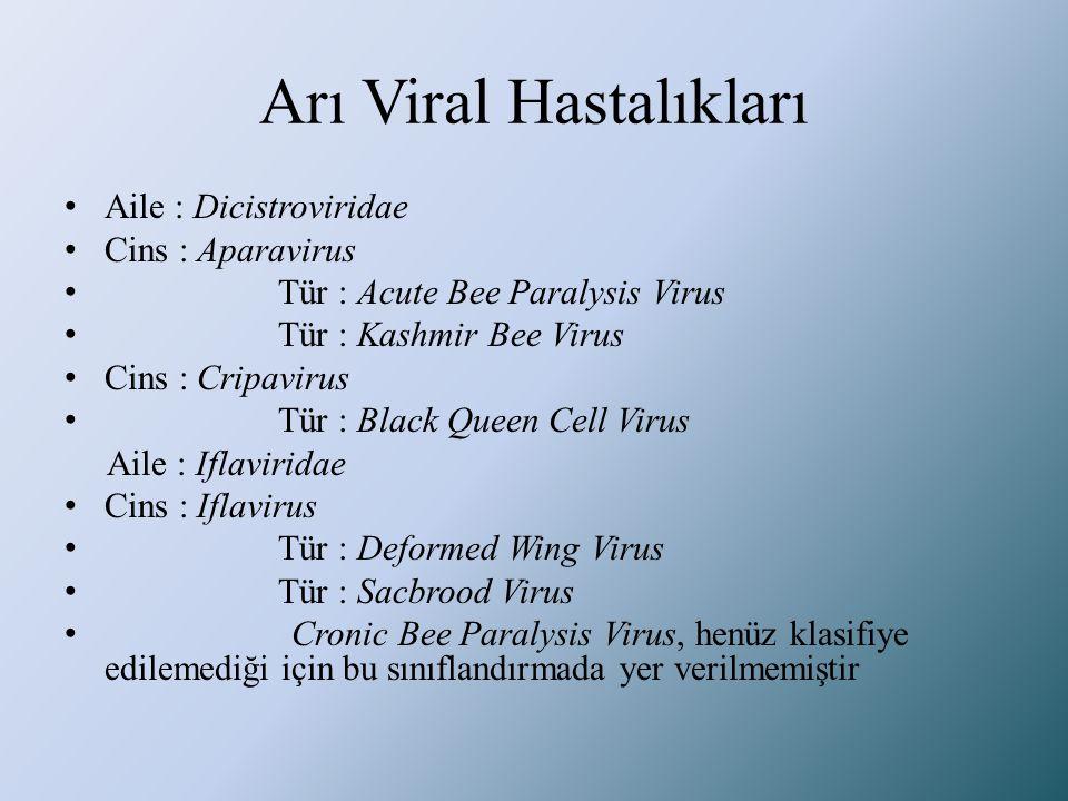 Arı Viral Hastalıkları