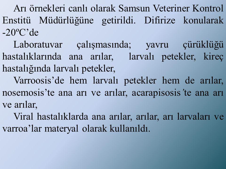 Arı örnekleri canlı olarak Samsun Veteriner Kontrol Enstitü Müdürlüğüne getirildi. Difirize konularak -20ºC'de