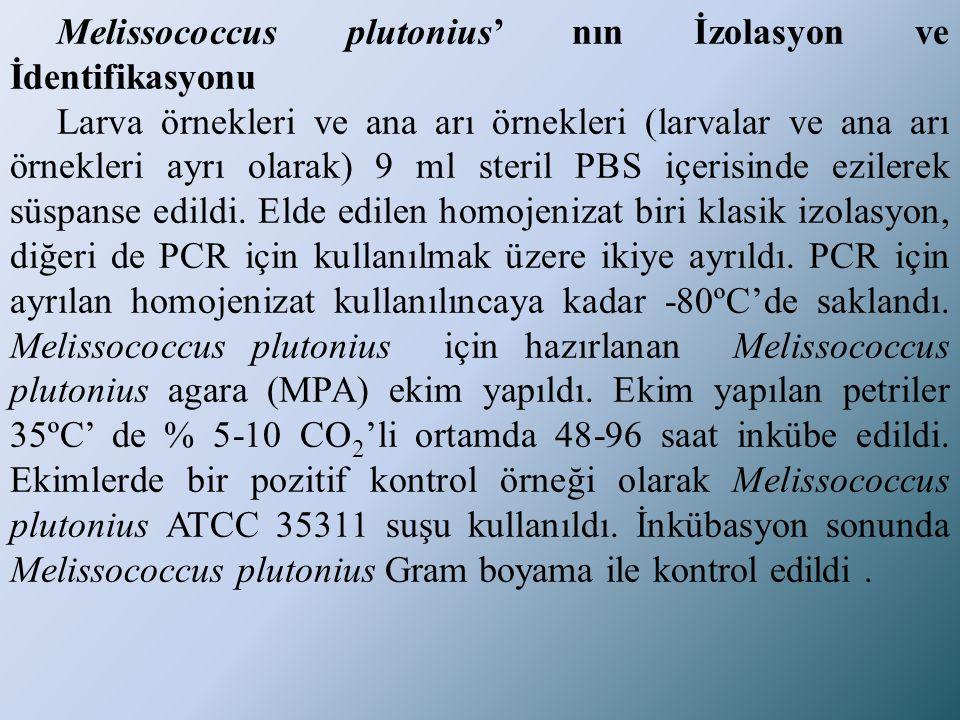 Melissococcus plutonius' nın İzolasyon ve İdentifikasyonu