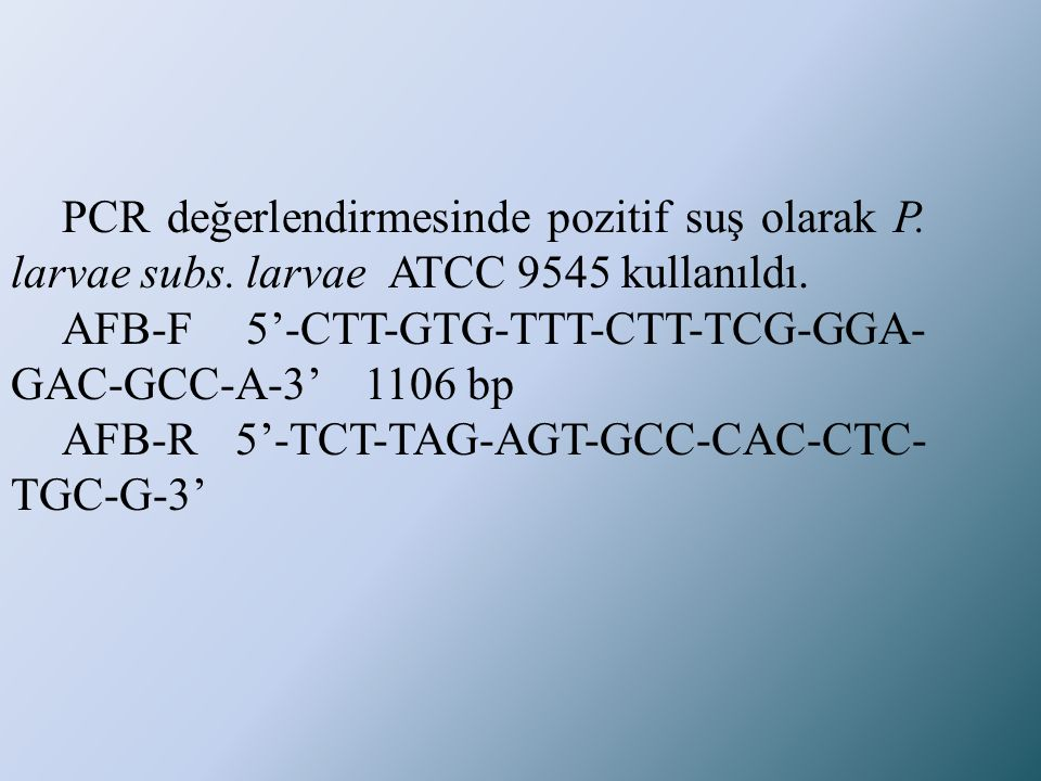 PCR değerlendirmesinde pozitif suş olarak P. larvae subs