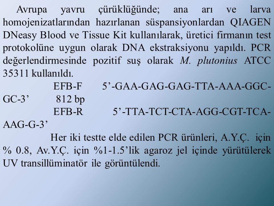 Avrupa yavru çürüklüğünde; ana arı ve larva homojenizatlarından hazırlanan süspansiyonlardan QIAGEN DNeasy Blood ve Tissue Kit kullanılarak, üretici firmanın test protokolüne uygun olarak DNA ekstraksiyonu yapıldı. PCR değerlendirmesinde pozitif suş olarak M. plutonius ATCC 35311 kullanıldı.