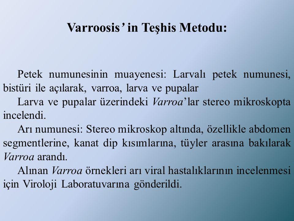 Varroosis' in Teşhis Metodu: