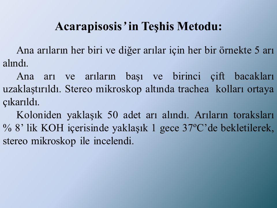 Acarapisosis' in Teşhis Metodu: