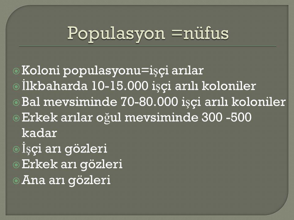 Populasyon =nüfus Koloni populasyonu=işçi arılar